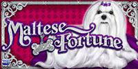 Maltese Fortune logo